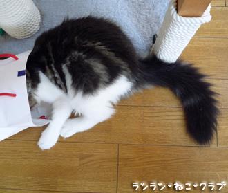 20080716cocomaro4.jpg