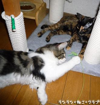 20080719cocomaro1.jpg