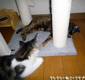 20080719cocomaro2.jpg