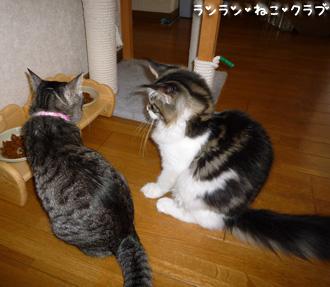 20080726guremaro2.jpg