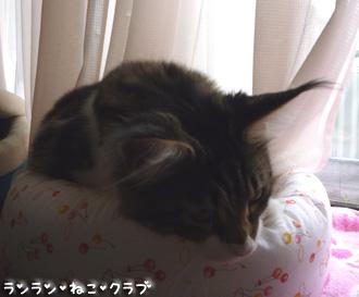 20080805maron1.jpg
