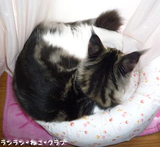 20080805maron5.jpg