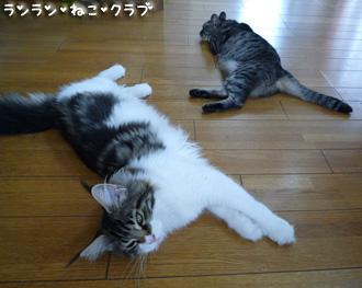 20080807guremaro1.jpg