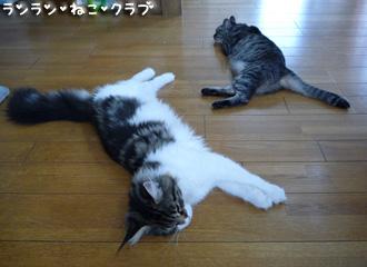 20080807guremaro2.jpg