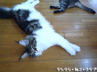 20080807guremaro3.jpg