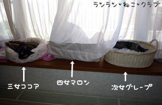 200808143nyanzu1.jpg
