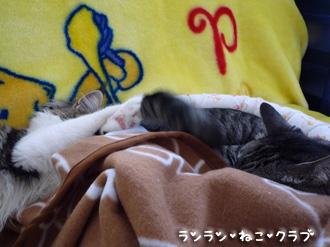 20080825guremaro5.jpg