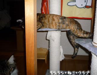 20080826cocomaro1.jpg