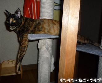 20080826cocomaro2.jpg