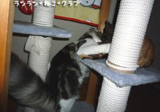 20080827cocomaro3.jpg