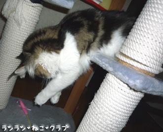 20080827cocomaro5.jpg