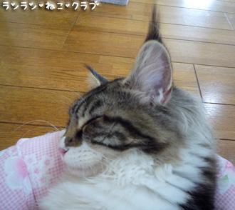 20080829maron3.jpg