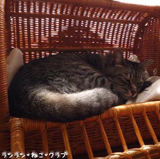 20080904gure3.jpg