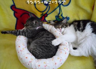20080905guremaro1.jpg