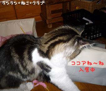 20080911cocomaro1.jpg