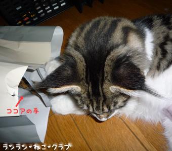 20080911cocomaro3.jpg