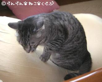 fumufumugure3.jpg