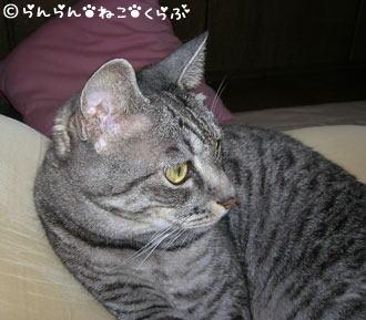 fumufumugure5.jpg
