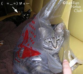 sofafukurogure53.jpg