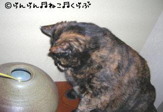 tsubotoran62.jpg