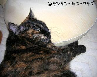 zaisumakurara65.jpg