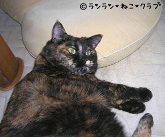 zaisumakurara66.jpg