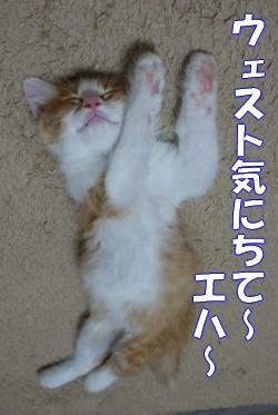 彦 アロハ体操4