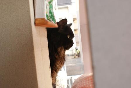 猫会 クロちゃん梅似