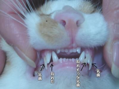 彦 乳歯アップ