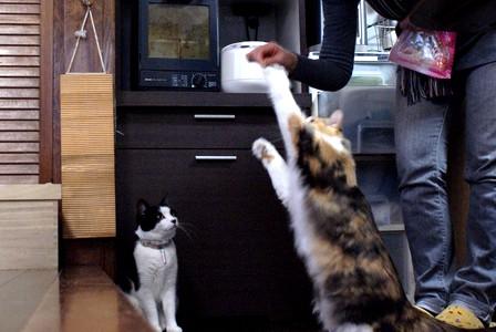 猫とも きなこキャッチ