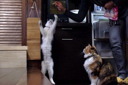 猫とも あんこキャッチ