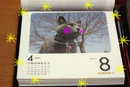ぶ 猫めくりカレンダー