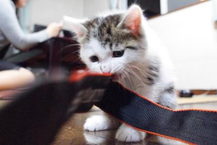 猫友 カメラの紐