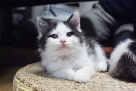 猫友 フジコ