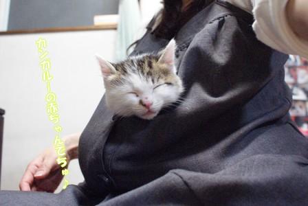 猫友 カンガルー