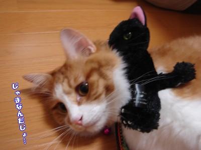 彦 マグ猫2