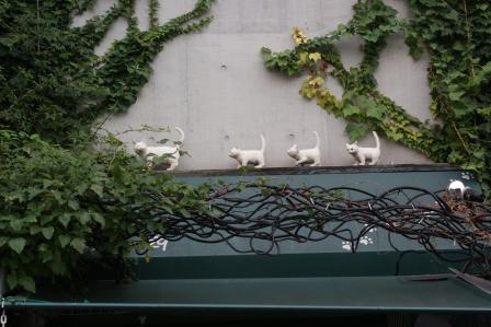 谷中 猫町白猫
