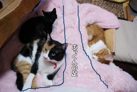 ル 寄り添う猫たち