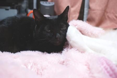梅 手枕3