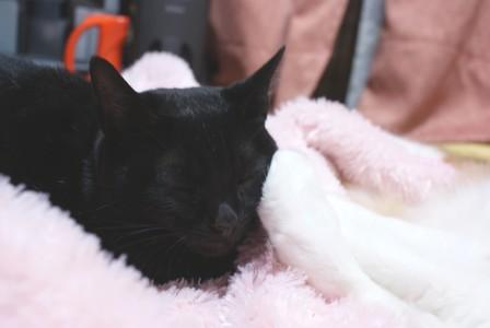 梅 手枕2