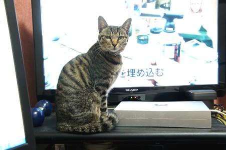 ミ TV前
