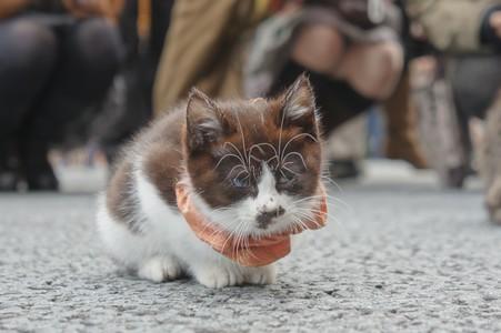 銀座 猫3