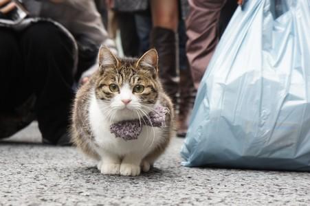 銀座 猫2