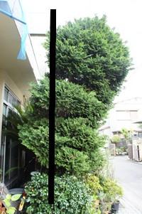 樹木 ナナメ2