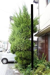 樹木 ナナメ