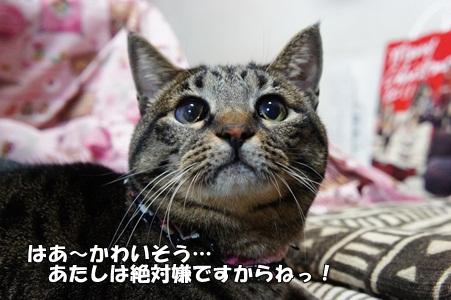 猫パ もも
