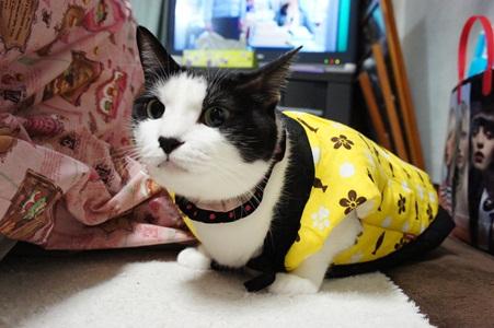猫パ あんこ