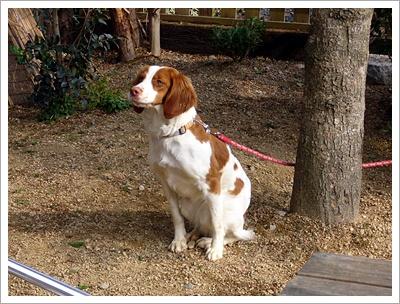 ミサオ 犬