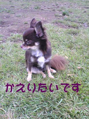 41_convert_20081006225238.jpg