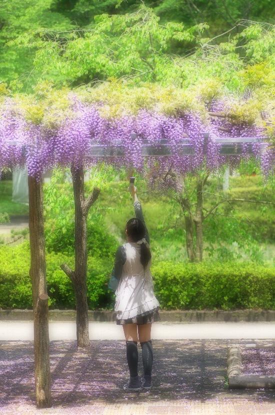 DSC_0095のコピーblog